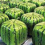 Feli546Bruce Quadratische Wassermelonensamen, 50 Stück Seltene Quadratische Wassermelonensamen Köstliche Obstpflanze Home Garden Yard Decor Quadratische Wassermelonensamen