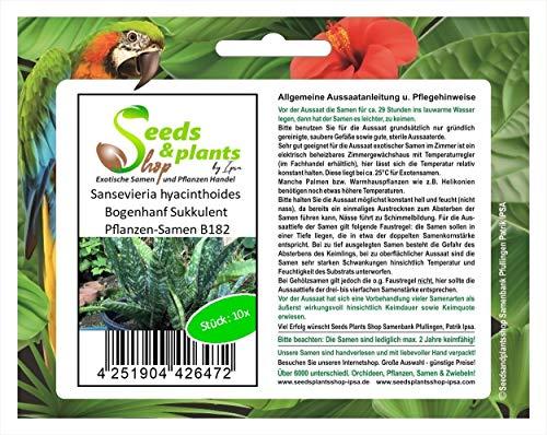 Stk - 10x Sansevieria hyacinthoides Bogenhanf Sukkulent Pflanzen-Samen B182 - Seeds Plants Shop Samenbank Pfullingen Patrik Ipsa