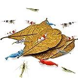 Sungrow Catappa Shrimp Leaves, 18-23 Cm, Proporciona Refugio Y Alimento, Fuente Adicional De Nutrición, Perfecta Para Empollar Y Esconderse, Hojas De Catappa Horneadas Al Sol, Paquete De 10