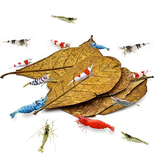 Feuilles d'Amandes Indiennes SunGrow pour Crevettes, Supplément Alimentaire, Idéales pour la Reproduction, Feuilles de Catappa Cuites au Soleil, Indispensables pour Éleveurs de Crevettes, Pack de 10