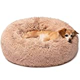 Dog Beds Review and Comparison