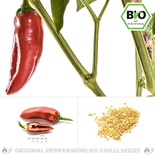 Pepperworld Fresno Bio Chili-Saatgut, 10 Korn, Chili-Schote zum Anpflanzen, saftig und mittel-scharf
