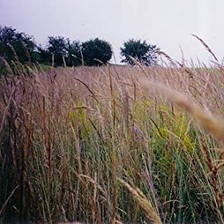 Outsidepride Tall Native Grass Seed Mix of Bluestems, Switchgrass, Indian Grass Seeds - 1 LB