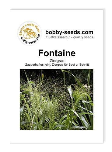 Bobby-Seeds Blumensamen Panicum Ziergras...
