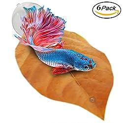 Betta fish toys top 10 best aquascape addiction for Betta fish toys