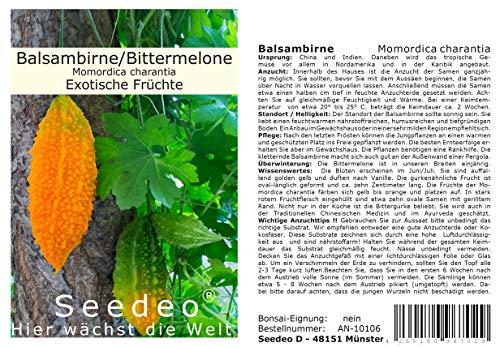 Seedeo® Balsambirne, Bittermelone (Momordica charantia) 5 Samen