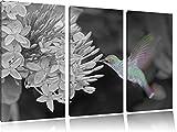 flinker Kolibri an wunderschöner Blüte schwarz/weiß