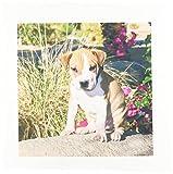 3dRose qs_88780_4 EIN American Pitt Bull Terrier Welpe