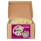 Paglietta per cesti | Paglia per ceste natalizie regalo vuote | Truciolo in legno per cestini vuoti e per imballaggio | Pagliuzza per confezioni e decorazioni (500 g)