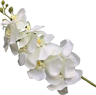 jiumengya 5PCS Cream Color Phalaenopsis Butterfly Moth Orchid 8 Big Flower Heads/Piece Orchids 105cm Long for Wedding Decorative Artificial Flowers (Cream)
