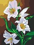 Pinte por Kits de números, Pintura al óleo de DIY en la Lona (montada en el Marco de Madera) para los Adultos de los niños Seniors Junior (Flores 181)