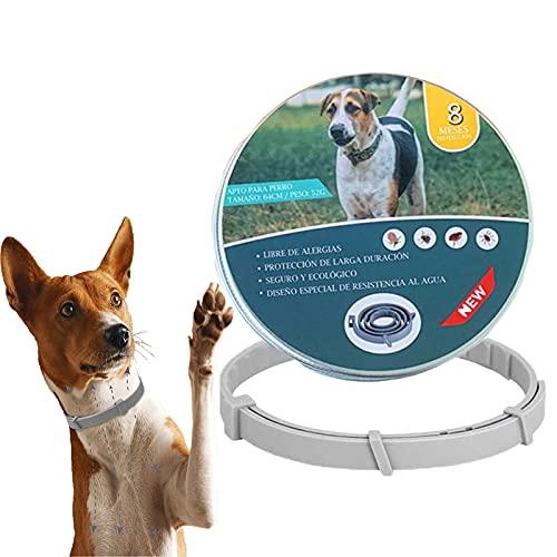LINKLKBOY Nuevo Collar Antiparásitos Perros,Collar Antipulgas Ajustable,Collar Antiparasitos Perro Gato,para Pequeños, Medianos,Prevención de 8 Meses contra Pulgas, Garrapatas (Caja de Hierro)