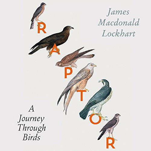Raptor: A Journey Through Birds audiobook cover art