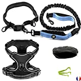 Newka Canicross Lead And Belt Hands Free or dog walking belt and leash + Dog Harness Size Large + Phone Holder For Running Bag waist