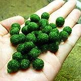 TENGGO Egrow 200PCS/Pack Plantas Acuáticas Semillas Plantas de Césped de Agua Mixta Acuario Peces de Césped Acuario Moss Plante