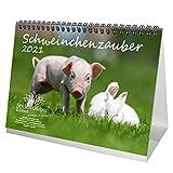 Calendrier de table 2021 cochons - Format A5 - Coffret cadeau - Contenu : 1 calendrier, 1 carte de vœux de Noël et 1 carte de vœux (3 pièces au total)