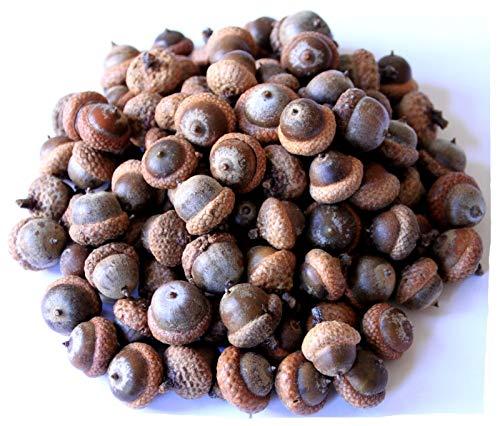 Eicheln 1,5 kg, 14€ pro kg, braune ausgereifte Roteichenfrüchte mit Hütchen, Natur Tierfutter, Bastelbedarf