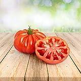 Tomate ''Montserrat'' 25 x Semillas de Portugal, 100% Cultivo Natural, Ideal para Ensaladas y Aperitivos