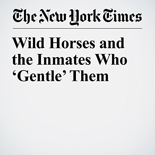 Wild Horses and the Inmates Who 'Gentle' Them copertina