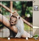 Grau-brauner AFFE auf grünem Waldhintergr& Hochwertiger, abriebfester, wasserdichter, schnell trocknender Duschvorhang für das Badezimmer