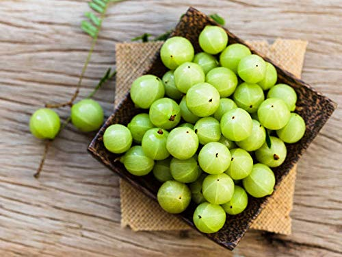 HoitoDeals Natural Organic Indian Gooseberry Fresh Alma and Skin Herbal Remedy