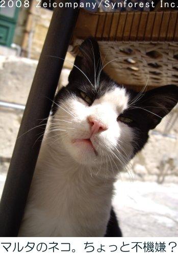 シンフォレスト『地中海・猫の旅6500キロ』
