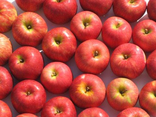 【訳あり】 岩手県産 りんご 10kg