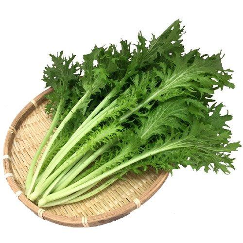 国産新鮮野菜 わさび菜 業務用 2kg 水耕栽培