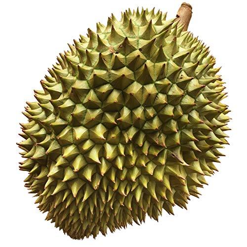 ドリアン ベトナム産 1玉 2kg〜2.5kg 生鮮 フレッシュ フルーツ 果物