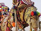 Saving Camels