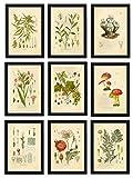 Ink Inc. Psychoactive Halluzinogene Pflanzen Botanische