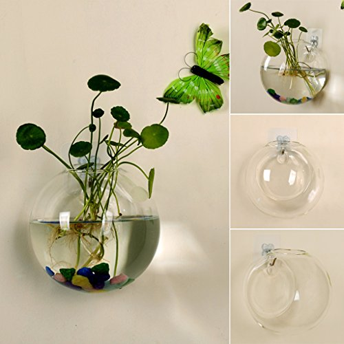 Youliy - Vaso in vetro da appendere alla parete, 12 cm, coltura idroponica, terrario, acquario, per piante e fiori in vaso