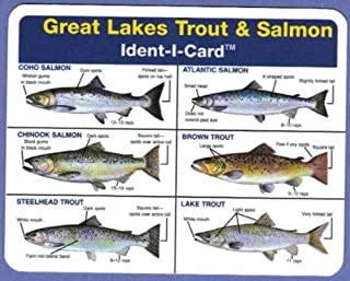 great lakes fish identification