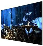 celexon Ecran de Projection sur Cadre Mural CLR pour Home Cinema et Entreprises - vidéoprojecteurs Ultra-Courte focale - 100' - 220 x 124 cm - Gain 0,6-4K UHD- Active 3D