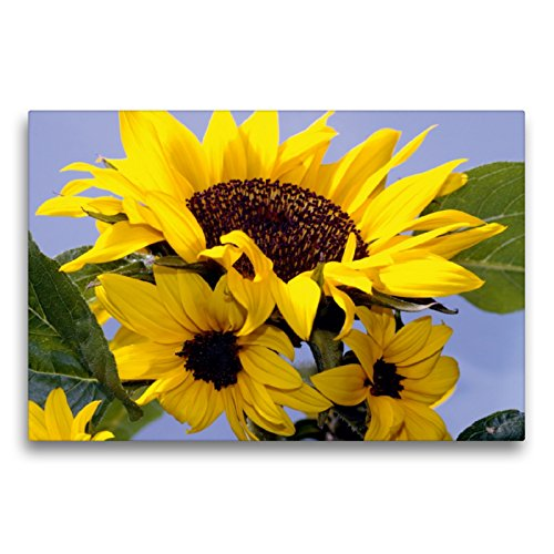 CALVENDO Premium Textil-Leinwand 75 x 50 cm Quer-Format Sonnenblumenfamilie, Leinwanddruck von Lothar Reupert