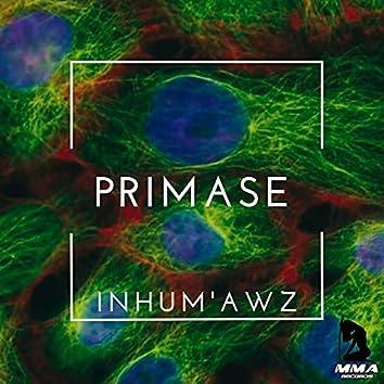 Primase