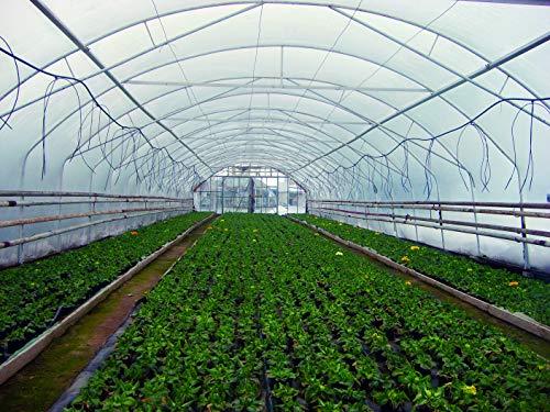 infrarot-heiztechnologie 6mx8m Polly Tunnel Clear Polyethylen Gewächshaus Pflanzen Abdeckung Gartenbaumembran Folie Rising Bed