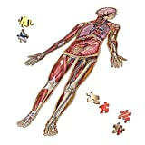 Human Full Body Anatomy Jigsaw Puzzle Bundle | Dr Livingston's Unique Shaped Science Puzzles, Accurate Medical Illustrations of The Body, Organs, Stomach, Liver and Intestines
