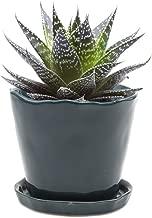 5 litre plant pots