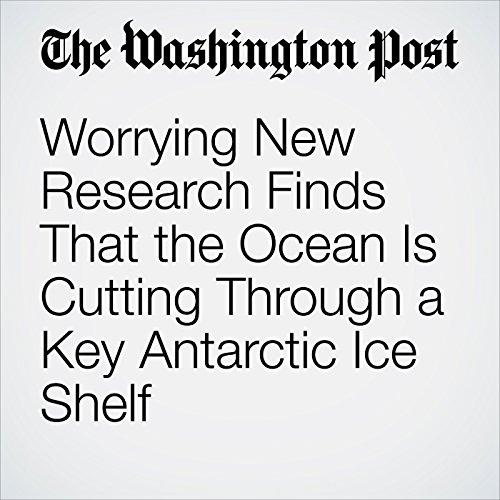 Worrying New Research Finds That the Ocean Is Cutting Through a Key Antarctic Ice Shelf copertina