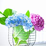 bosslandy-artificial-silk-hydrangea-flower-heads-12pcs-heads-with-real-touch-stems-for-wedding-centerpieces-flower-wall-baby-shower-home-decor-diy-party-office-hotel-festive-decoration-champagne