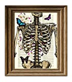 The Skeleton and the Butterflies Anatomical Illustration Beautifully Upcycled Dictionary Page Book Art Print