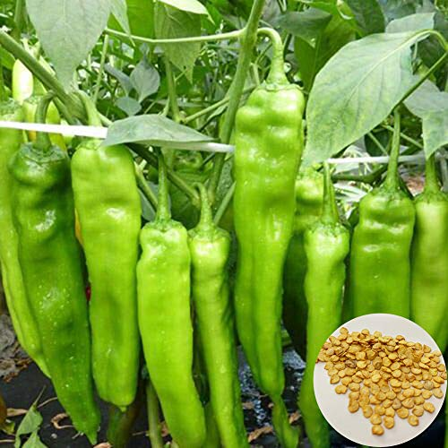 Dyyicun12 200Stks Super Hot Chili Peper Zaden, Tuin Boerderij Plant Voedzame Kruid Groente
