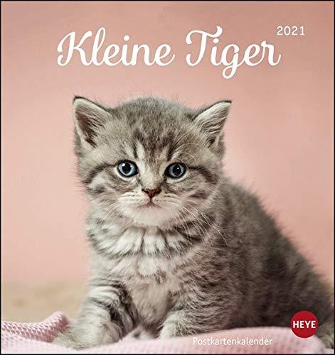 Katzen - Kleine Tiger Postkartenkalender 2021 - Kalender mit perforierten Postkarten - zum Aufstellen und Aufhängen - mit Monatskalendarium - Format 16 x 17 cm