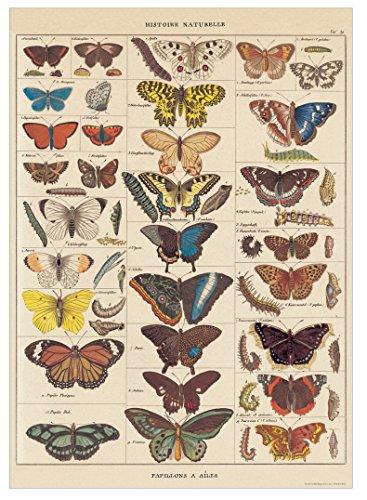 Cavallini papier dekoracyjny - motyle z historii naturalnej 20 x 28 arkusz od Cavallini Papers & Co.