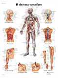 Poster 3B Scientific qualitàelevata