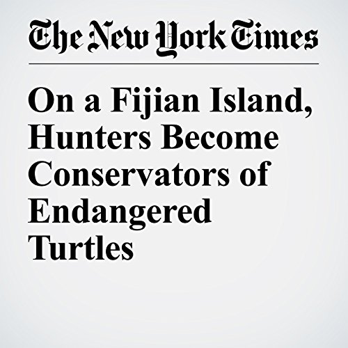 On a Fijian Island, Hunters Become Conservators of Endangered Turtles copertina