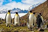 DesFoli Pinguine Herde Winter Arktis Poster Kunstdruck