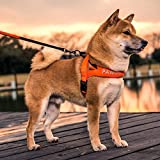 L Pet supplies Correa para el Perro con el Perro Shiba Inu Perro con Cuerda de tracción para Perros pequeños Golden Retriever Perro Grande a Prueba de explosiones Cuerda para Perros Corriendo