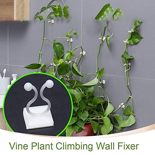 100PCS Garden Vegetable Plant Support Binding Clip Vine Plant Climbing Wall Fixer para Hacer Que Las Verduras del jardín crezcan Verticales